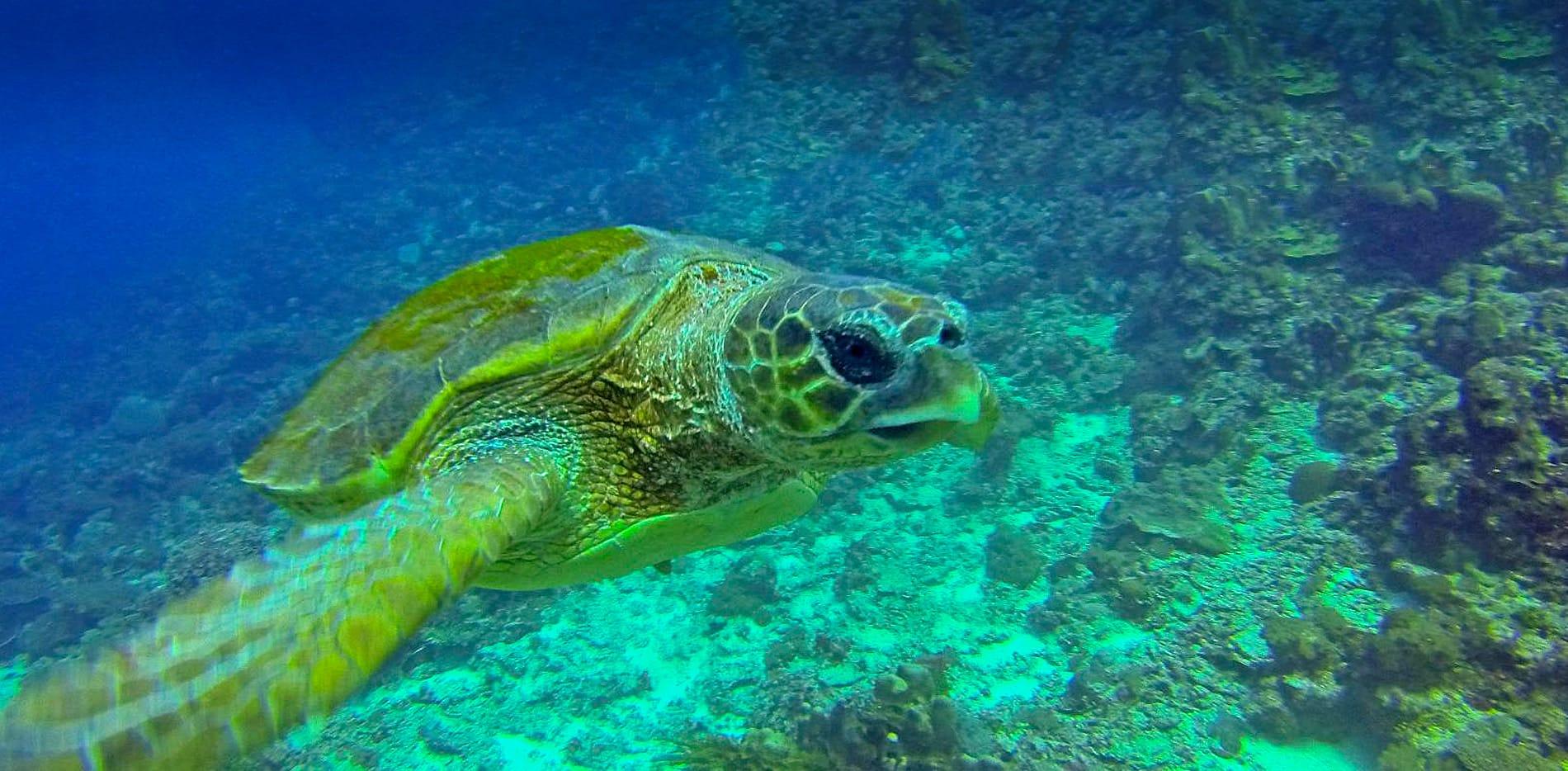 turtle Mafia island Tanzania