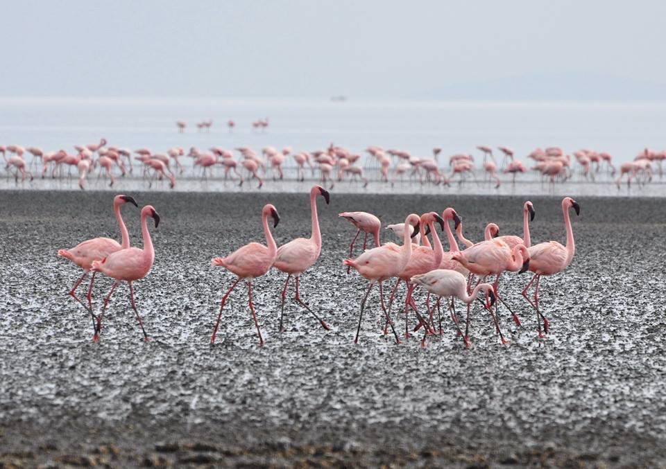 Flamingos Tanzania - Lake Natron