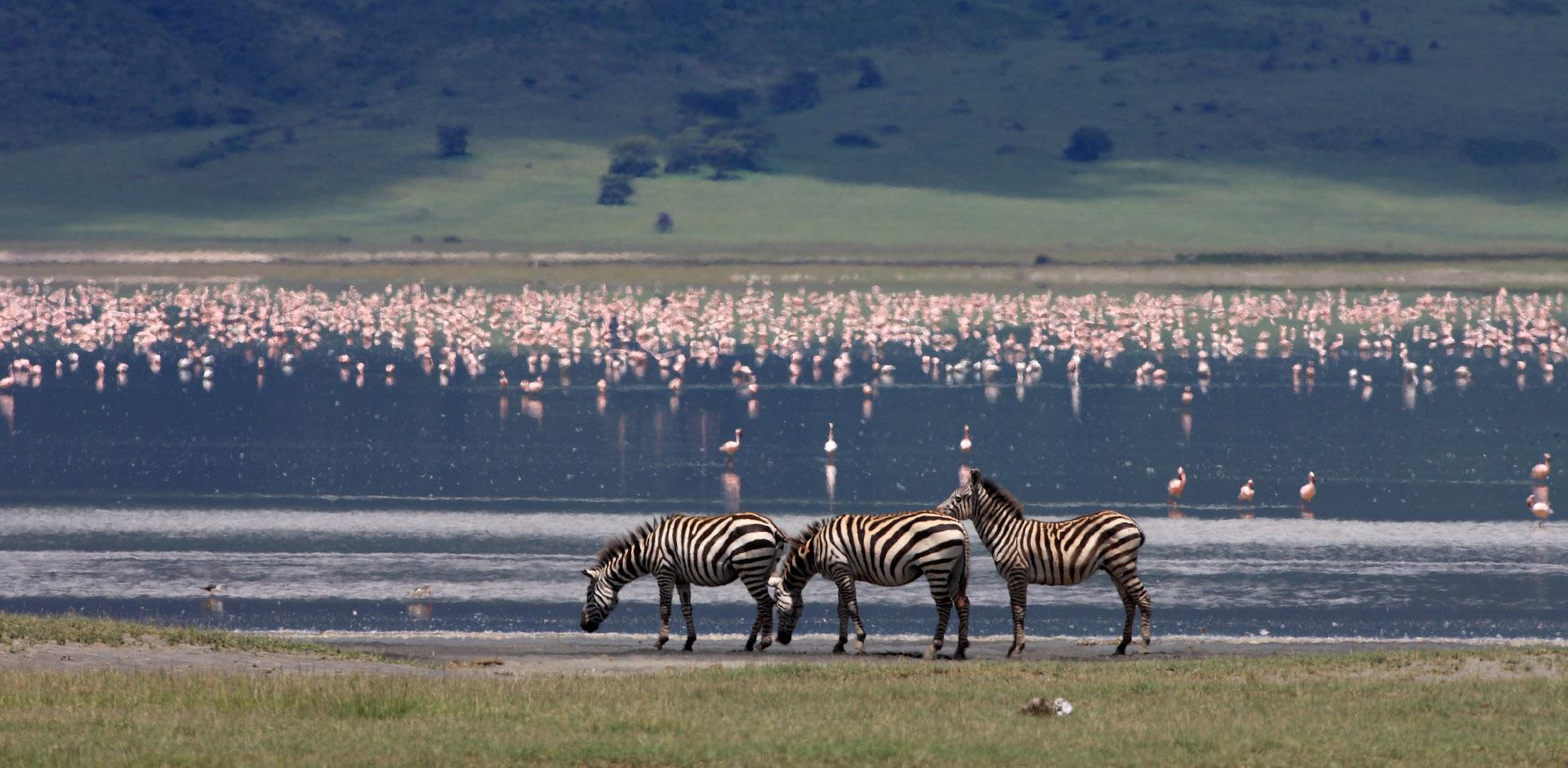 Ngorongoro Conservation area, Tanzania, animallovers