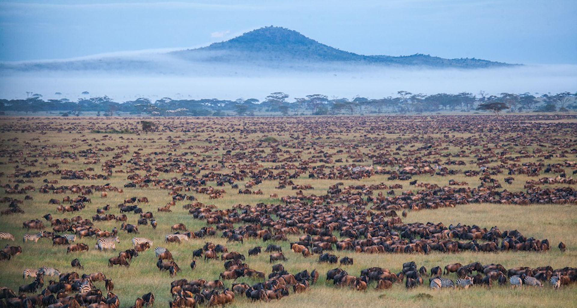 The Serengeti Migration, nature at its best