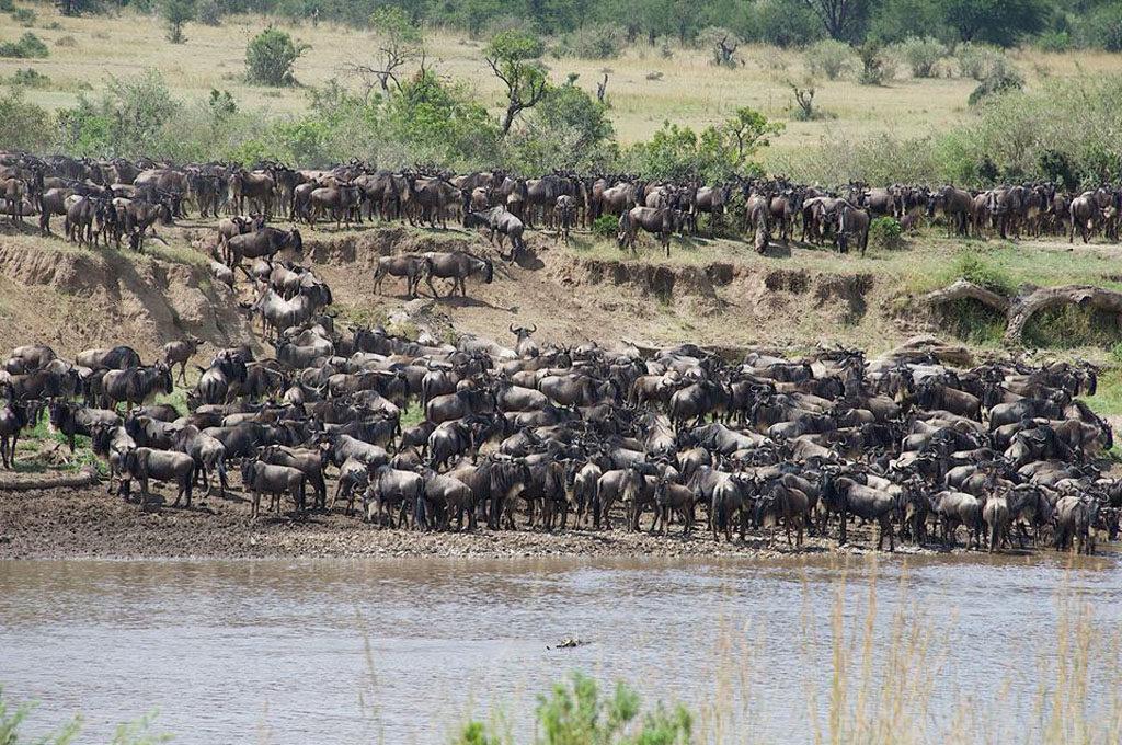 K - MARA <br> Safari Migrazione luglio-ottobre e il Lake Natron