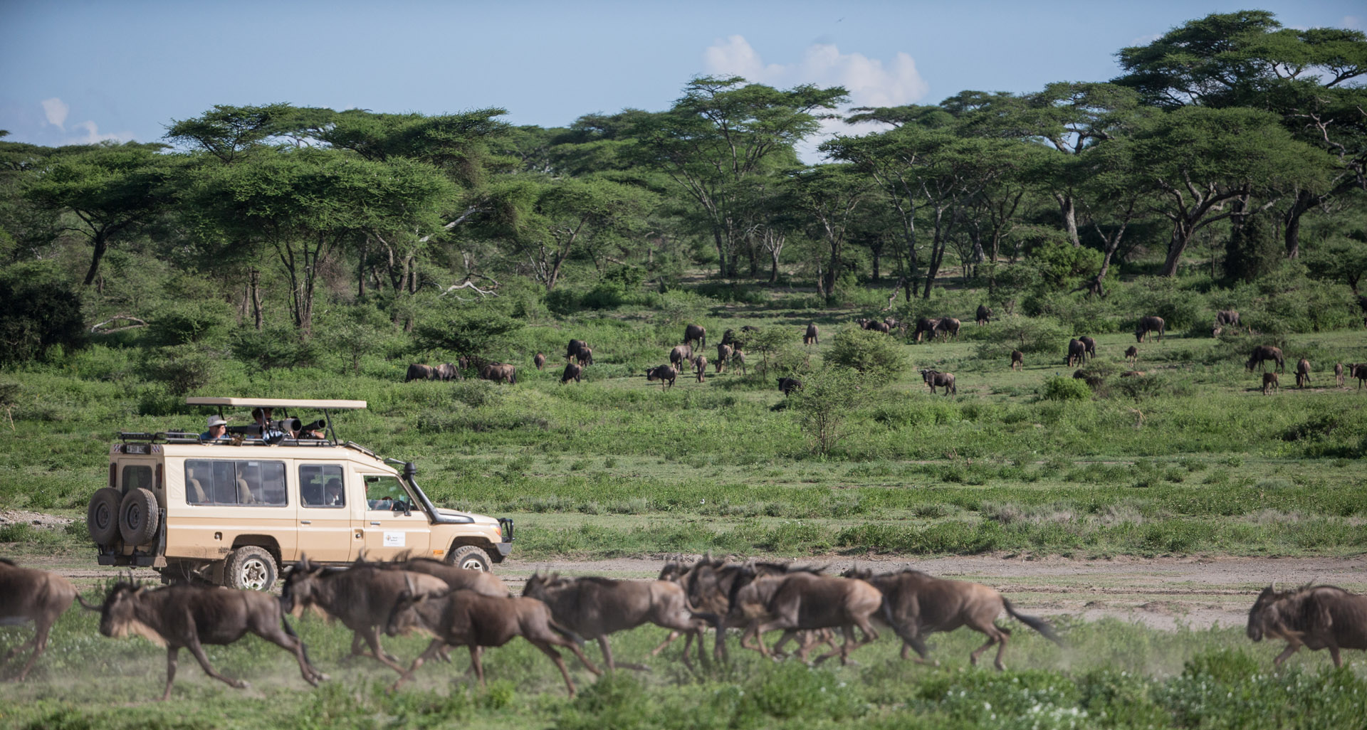 wildebeests Serengeti, Safari small Grup Tanzania