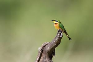 Birdsgallery Selous, Selous Game reserve Tanzania