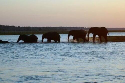 Elefanti attraversano delta Okavango