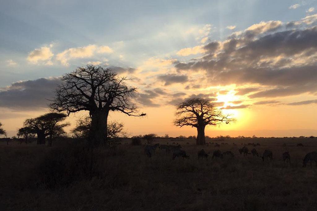 baobab tree and Tarangire sunset, Tanzania safari