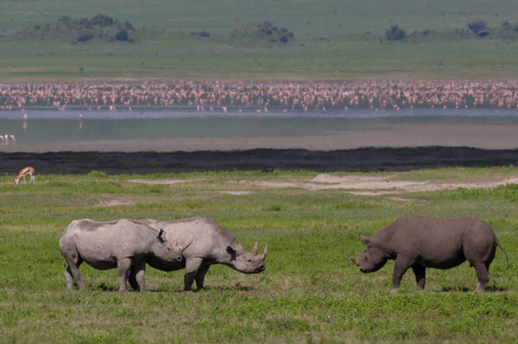 Ngorongoro crater, rhinos Tanzania