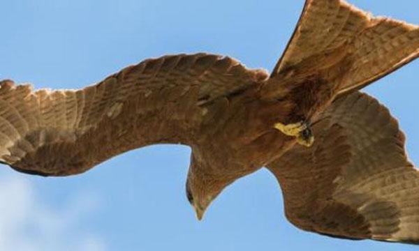 Tanzania birdsgallery, Flight to Tanzania