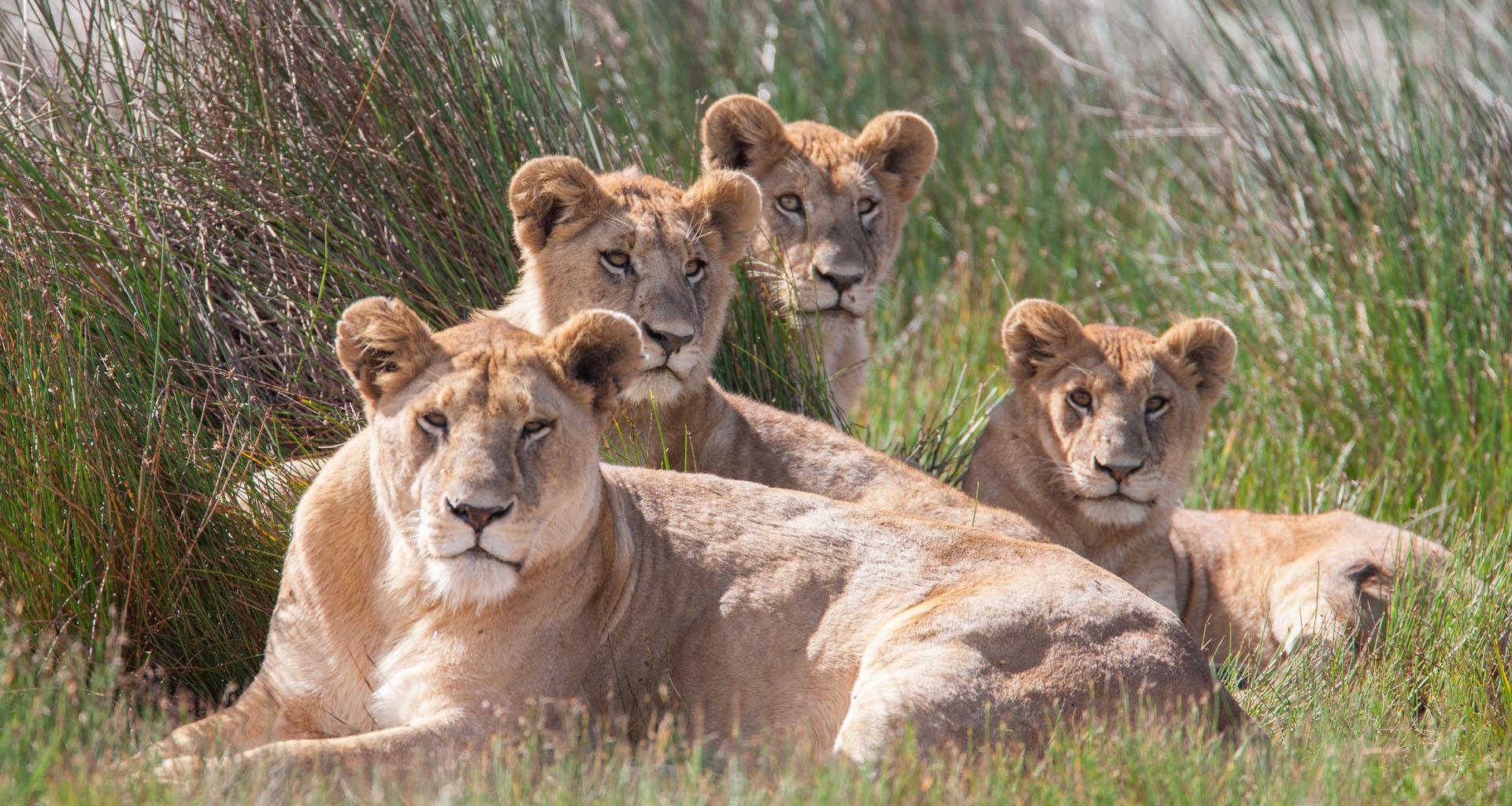 Safari Crew Tanzania, african safari specialists