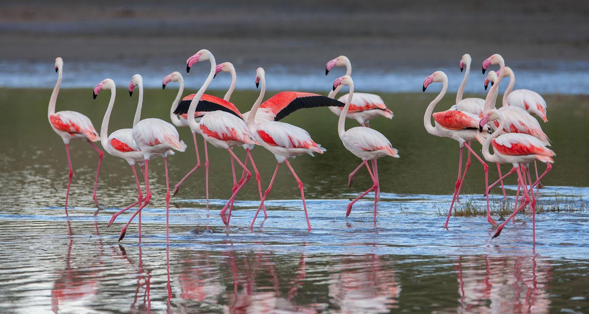 flamingos, Tanzania, safari