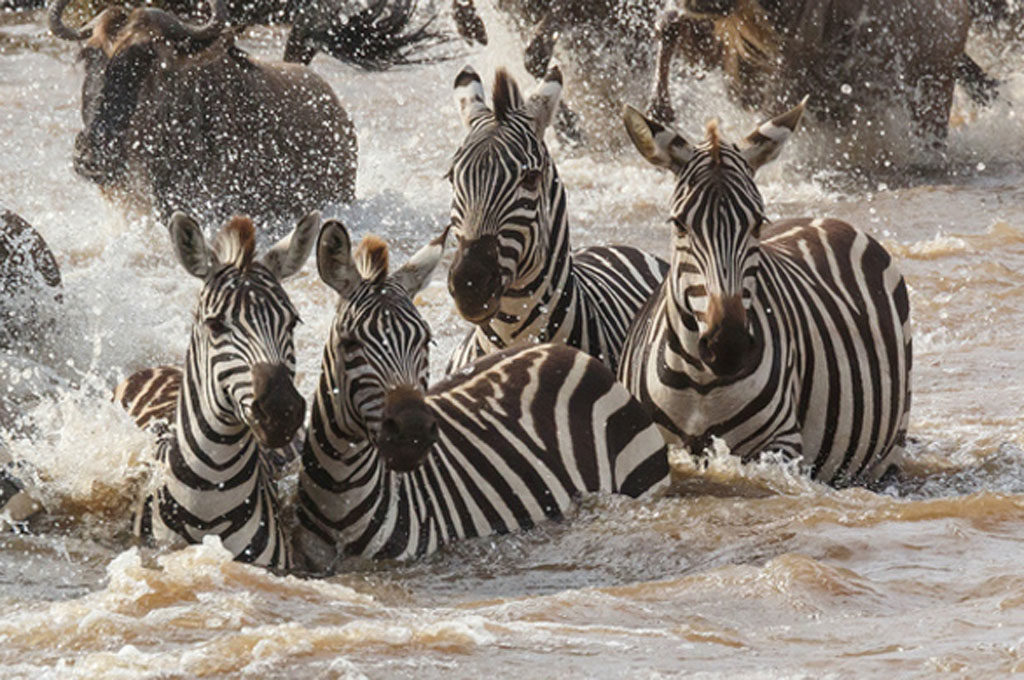 big herd migration, Serengeti, Tanzania