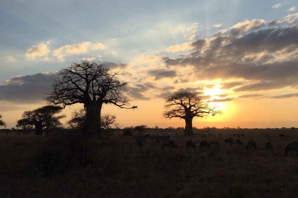 Baobab al tramonto nel Parco del Tarangire - Tanzania